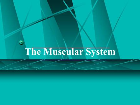 The Muscular System.  Muscles are responsible for all types of body movement  Three basic muscle types are found in the body  Skeletal muscle  Cardiac.