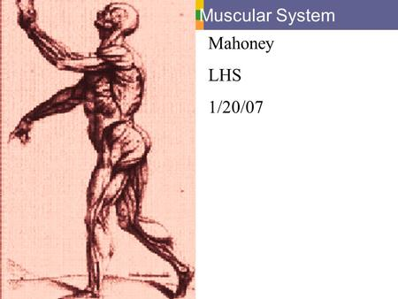 Muscular System Mahoney LHS 1/20/07.