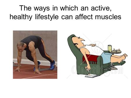 The ways in which an active, healthy lifestyle can affect muscles.
