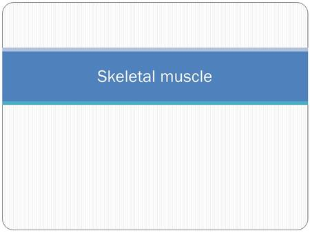 Skeletal muscle. 5 Golden Rules 1. With a few exceptions, all skeletal muscles cross at least one joint 2. Typically, the bulk of the skeletal muscle.