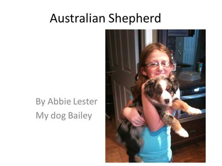 Australian Shepherd By Abbie Lester My dog Bailey.