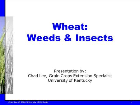 Chad Lee © 2006 University of Kentucky 1 Wheat: Weeds & Insects Presentation by: Chad Lee, Grain Crops Extension Specialist University of Kentucky.
