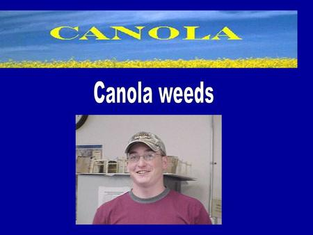 Canola Facts Bright yellow-flowering member of the Brassicaceae (mustard) family. Cultivated for animal feed, vegetable oil for human consumption and.