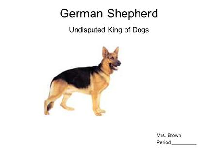 German Shepherd Undisputed King of Dogs Mrs. Brown Period _________.