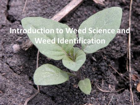 Introduction to Weed Science and Weed Identification.