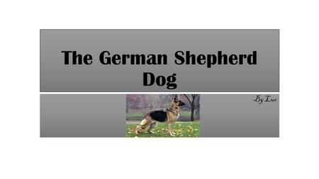 The German Shepherd Dog By Luc. About the German Shepherd The German shepherd is a breed of large-sized working dog that originated in Germany. The breeds.