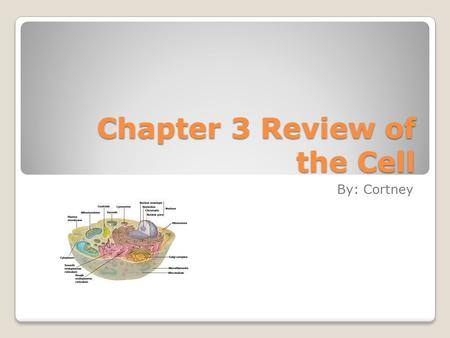 Chapter 3 Review of the Cell By: Cortney. Basic Concepts of the Cell Theory In 1665, a scientist named Robert Hooke first described what cells really.