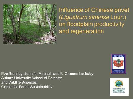 Influence of Chinese privet (Ligustrum sinense Lour.) on floodplain productivity and regeneration Eve Brantley, Jennifer Mitchell, and B. Graeme Lockaby.
