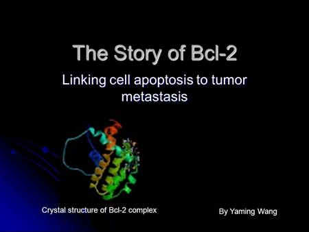 The Story of Bcl-2 Linking cell apoptosis to tumor metastasis Crystal structure of Bcl-2 complex By Yaming Wang.