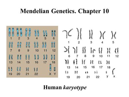 Mendelian Genetics. Chapter 10 Human karyotype. Gene basic unit of inheritance a heritable factor that controls a specific characteristic a given number.