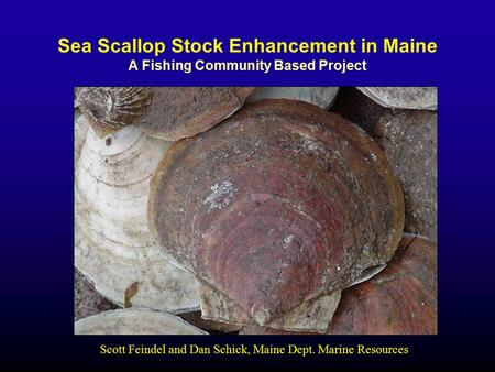 Sea Scallop Stock Enhancement in Maine A Fishing Community Based Project Scott Feindel and Dan Schick, Maine Dept. Marine Resources.