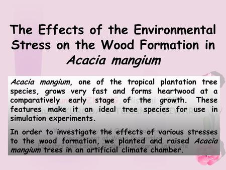 The Effects of the Environmental Stress on the Wood Formation in Acacia mangium Chunhua ZHANG, Hisashi ABE Katsushi KURODA & Takeshi FUJIWARA Wood Anatomy.