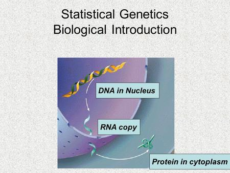 DNA in Nucleus RNA copy Protein in cytoplasm Statistical Genetics Biological Introduction.