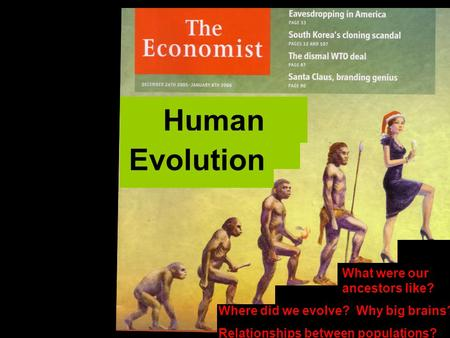 Human Evolution What were our ancestors like? Where did we evolve? Why big brains? Relationships between populations?