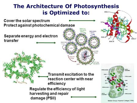 The Architecture Of Photosynthesis