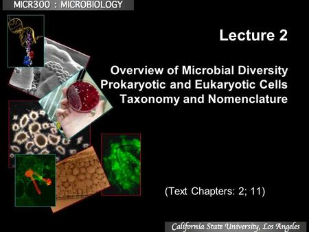 Lecture 2 Overview of Microbial Diversity Prokaryotic and Eukaryotic Cells Taxonomy and Nomenclature (Text Chapters: 2; 11)