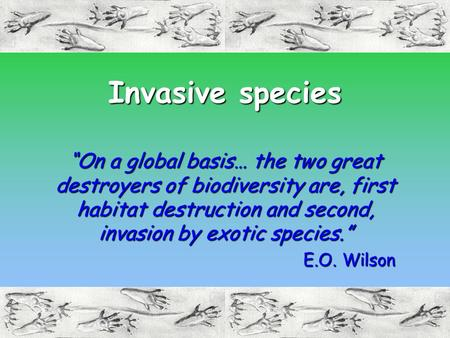 "Invasive species ""On a global basis… the two great destroyers of biodiversity are, first habitat destruction and second, invasion by exotic species."" E.O."