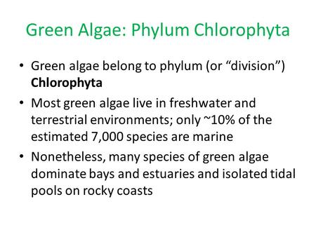 "Green Algae: Phylum Chlorophyta Green algae belong to phylum (or ""division"") Chlorophyta Most green algae live in freshwater and terrestrial environments;"