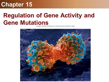Chapter 15 Regulation of Gene Activity and Gene Mutations.