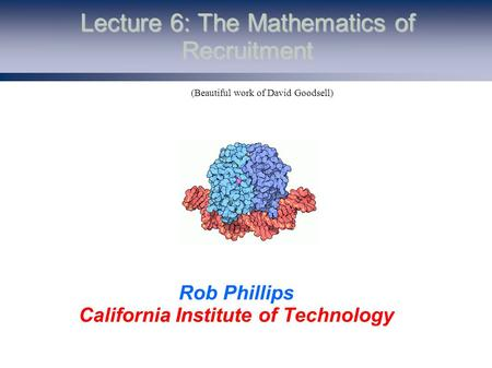 Lecture 6: The Mathematics of Recruitment Rob Phillips California Institute of Technology (Beautiful work of David Goodsell)