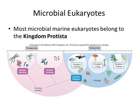 Microbial Eukaryotes Most microbial marine eukaryotes belong to the Kingdom Protista.