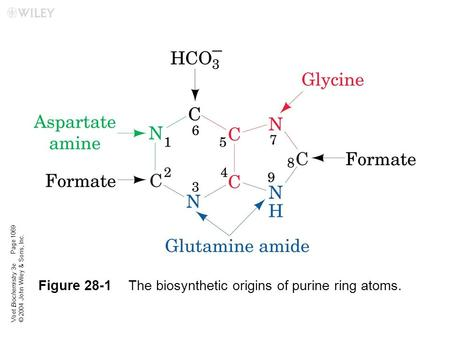 Voet Biochemistry 3e © 2004 John Wiley & Sons, Inc. Figure 28-1The biosynthetic origins of purine ring atoms. Page 1069.