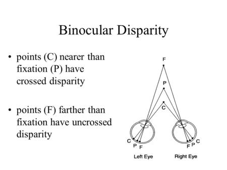 Binocular Disparity points (C) nearer than fixation (P) have crossed disparity points (F) farther than fixation have uncrossed disparity.
