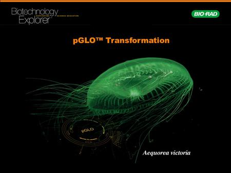 PGLO™ Transformation. Central Framework of Molecular Biology DNA RNA ProteinTrait.