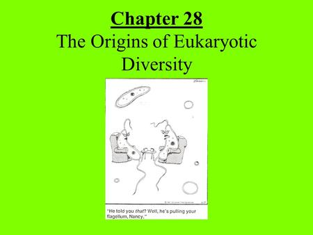 Chapter 28 The Origins of Eukaryotic Diversity.