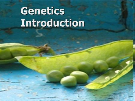 Genetics Introduction. Genetics The study of heredity - the transmission of characteristics from parents to offspring The study of heredity - the transmission.