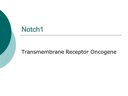 Notch1 Transmembrane Receptor Oncogene. What is Notch1?  Transmembrane protein involved in a conserved and simple signaling pathway.