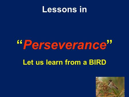 "Lessons in ""Perseverance"" Let us learn from a BIRD."