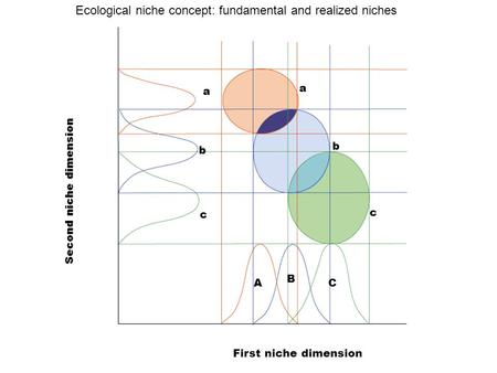 A b c a b c A B C First niche dimension Second niche dimension Ecological niche concept: fundamental and realized niches.