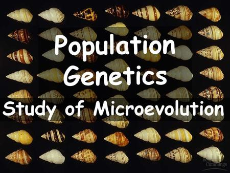 1 Population Genetics Study of Microevolution. 2 2 Gene Pools gene pool A population's gene pool is the total of all genes in the population at any one.