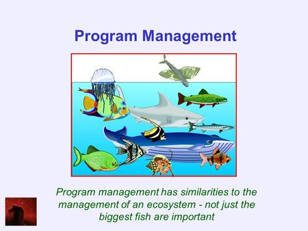 Program Management Program management has similarities to the management of an ecosystem - not just the biggest fish are important.