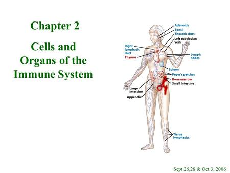 Chapter 2 Cells and Organs of the Immune System Sept 26,28 & Oct 3, 2006.