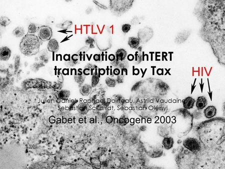 Inactivation of hTERT transcription by Tax Julien Daniel, Raphael Doineau, Astrild Vaudaine, Sebastian Schmidt, Sebastian Olényi Gabet et al., Oncogene.