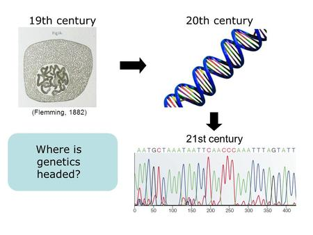 19th century20th century 21st century (Flemming, 1882) Where is genetics headed?