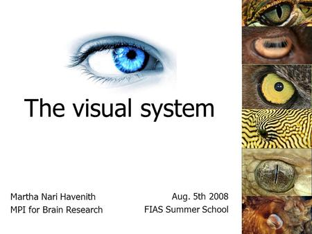 The visual system Martha Nari Havenith MPI for Brain Research Aug. 5th 2008 FIAS Summer School.