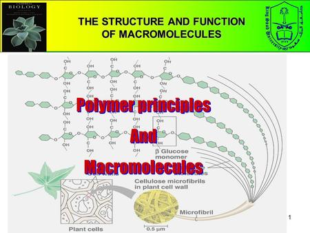 the structure and function of macromolecules Summary of the main categories of organic macromolecules: carbohydrates, proteins, nucleic acids & lipids includes links to additional resources.