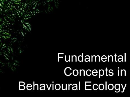 Fundamental Concepts in Behavioural Ecology. The relationship between behaviour, ecology, and evolution –Behaviour : The decisive processes by which individuals.