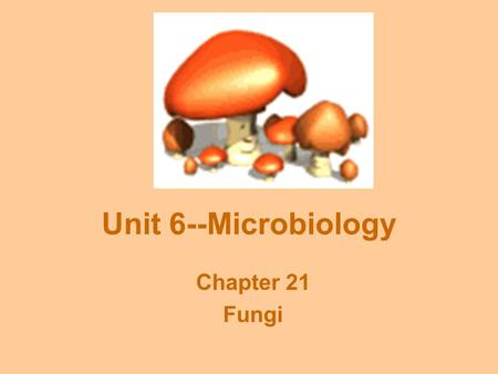 Unit 6--Microbiology Chapter 21 Fungi. Fungal Characteristics Filamentous bodies: Hyphae = thin filaments Mycelium = entire mass of hyphae Chitinous cell.