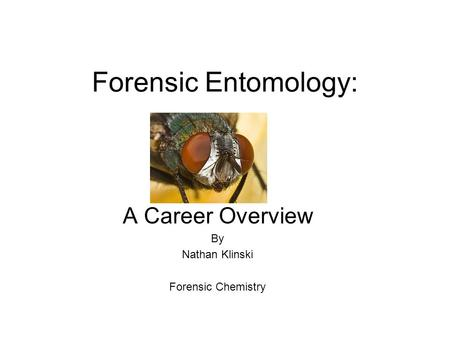Forensic Entomology: A Career Overview By Nathan Klinski Forensic Chemistry.