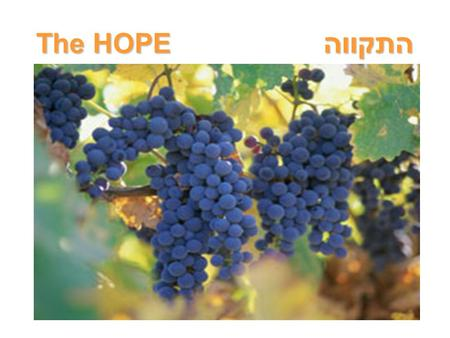 The HOPE התקווה. Colossians 1 From: Paul, an apostle of Jesus Christ by the will of G-d, and Timothy our brother. To: the people of G-d and faithful brothers.
