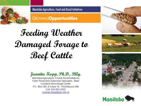 Feeding Weather Damaged Forage to Beef Cattle Juanita Kopp, Ph.D., P.Ag. Manitoba Agriculture, Food & Rural Initiatives Farm Production Extension Specialist.