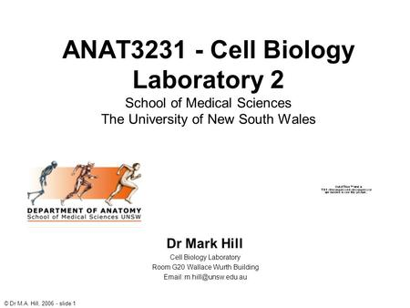 © Dr M.A. Hill, 2006 - slide 1 ANAT3231 - Cell Biology Laboratory 2 School of Medical Sciences The University of New South Wales Dr Mark Hill Cell Biology.