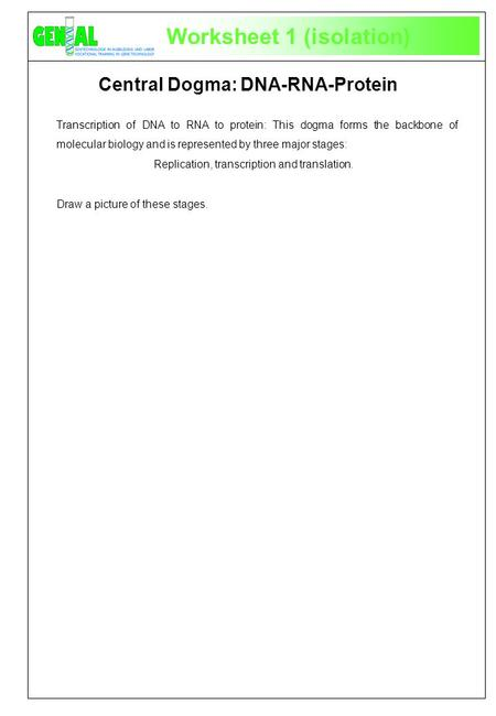 Worksheet 1 (isolation) Transcription of DNA to RNA to protein: This dogma forms the backbone of molecular biology and is represented by three major stages: