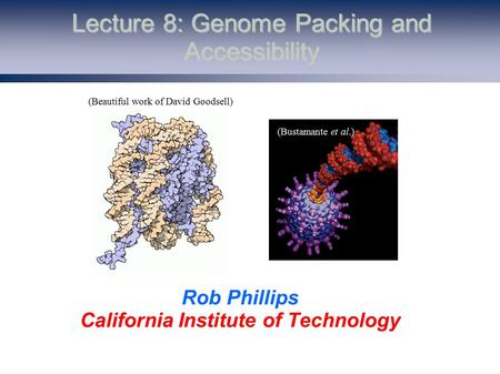 Lecture 8: Genome Packing and Accessibility Rob Phillips California Institute of Technology (Beautiful work of David Goodsell) (Bustamante et al.)
