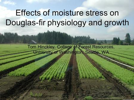 Effects of moisture stress on Douglas-fir physiology and growth Tom Hinckley, College of Forest Resources, University of Washington, Seattle, WA.
