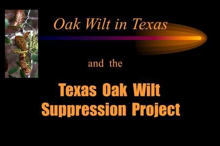 Oak Wilt in Texas and the Texas Oak Wilt Suppression Project.